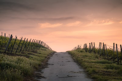 Trusting Path